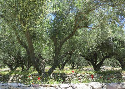 boomgaard met bloemen
