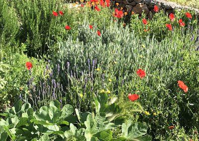 de tuin in bloei