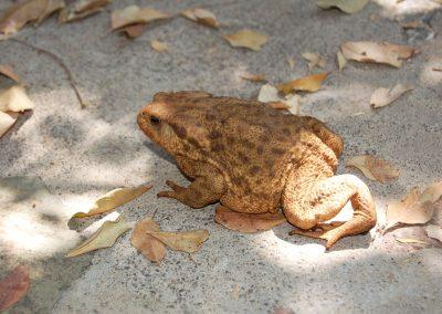 vrouwtjespad